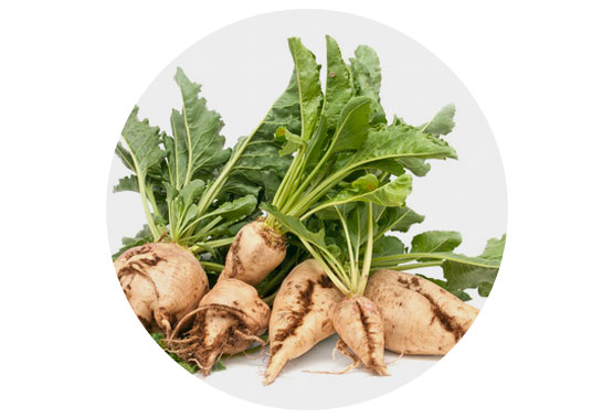 PEF treatment of plant or animal tissue aiming on cell disintegration has practically no size limitations. It can be applied to whole fruits, vegetables, potato tubers and sugar beets.