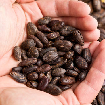 phytochemicals, from cocoa beans for example